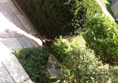 bushes and garden near concrete walkway