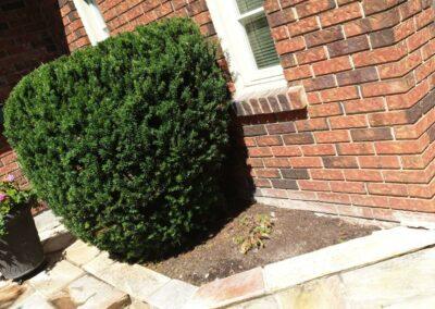 bushs beside home