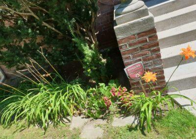 plants near front yard