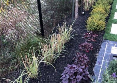 plants, fencing, garden