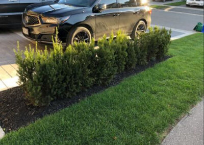 bushes, sidewalk, front garden