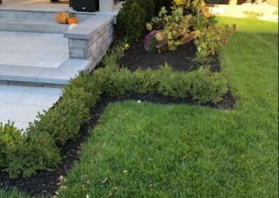 backyard, bushes, garden